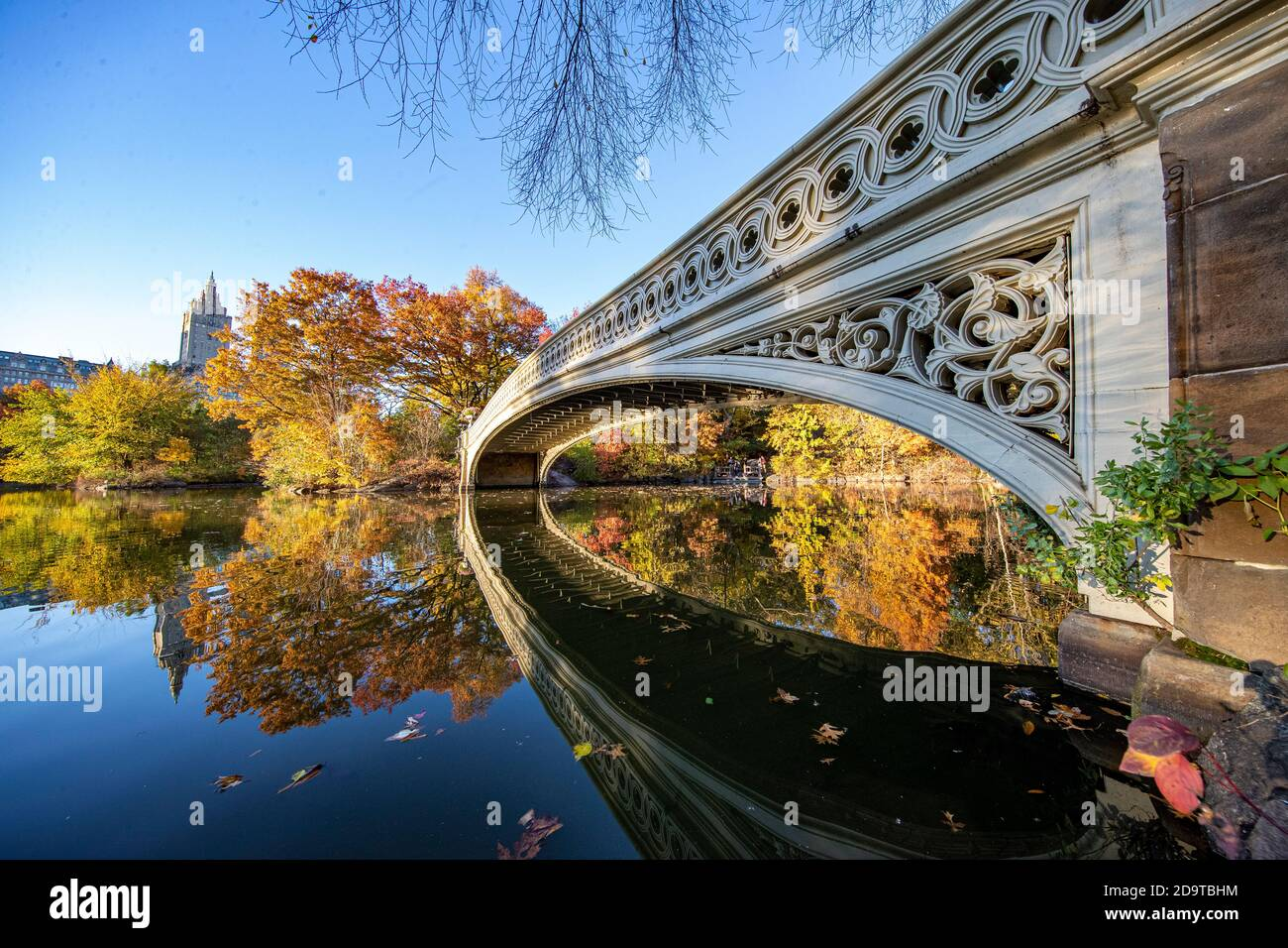 Trees reflect off the Pool in Central Park, New York City Stock Photo
